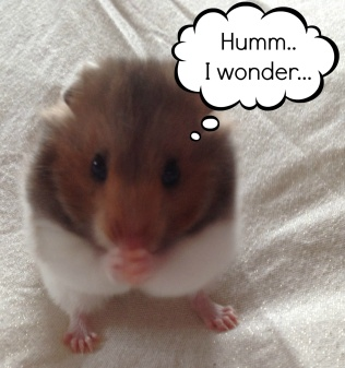 Animal Tails :): Hamster thoughts